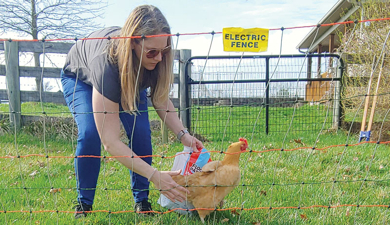 chicken electric fencing fence