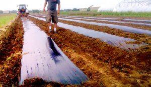 plastic mulch layer field crops gardening