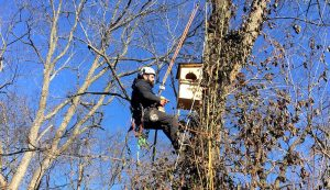installing owl nestbox