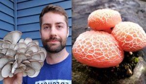 Freshcap Mushrooms