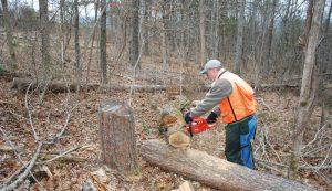 maintaining the woodlot