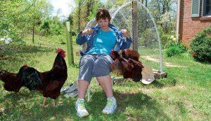 alpha hen chickens behavior