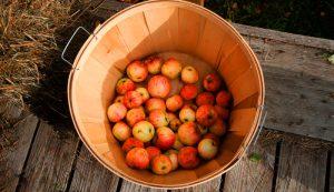 apple harvest hayride basket apples