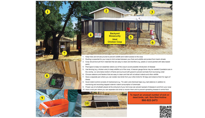 biosecurity infographic