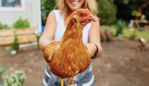 50 poultry-keeping tips