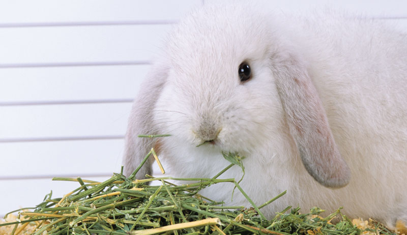 tips for feeding rabbits