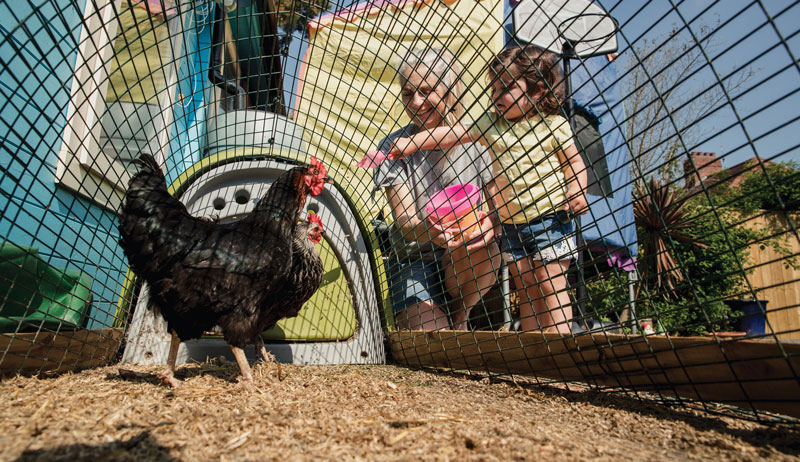 chicken flock biosecurity