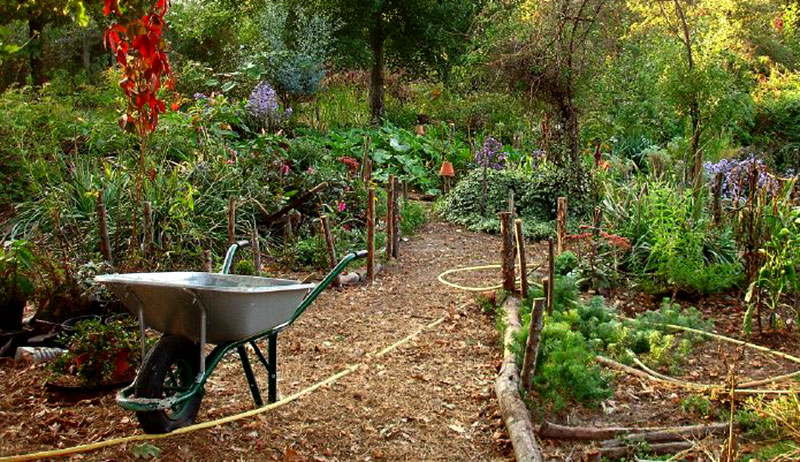 garden ready for winter gardening tips fall planting spring preparation novel coronavirus