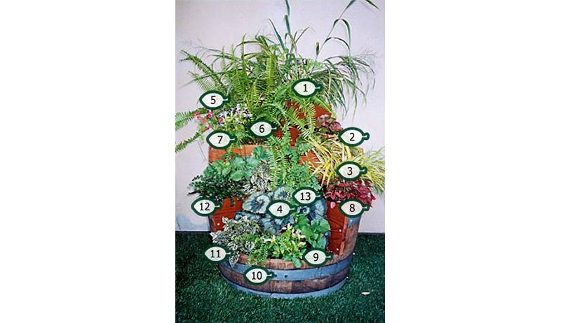 edible gardens for cats barrel of fun