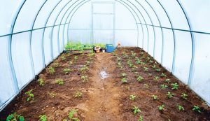 integrated pest management in the greenhouse
