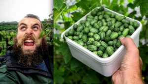 cucamelon hairy horticulturist