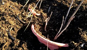 protect potted plants from frost