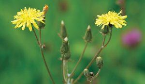 Shutterstock herbal sleep remedies