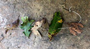 leaf leaves activities kids