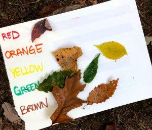 Rachael Dupree leaf leaves activities kids