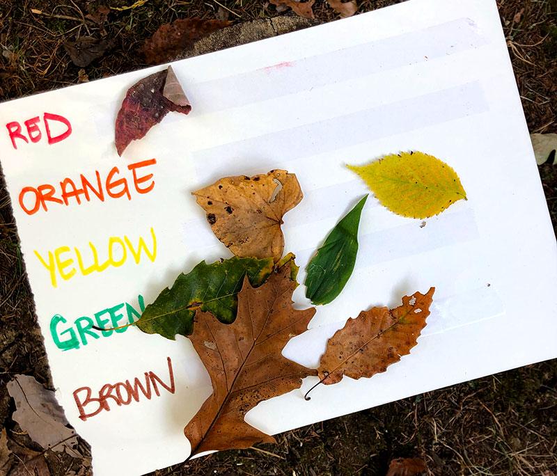 leaf leaves activities kids scavenger hunt rainbow