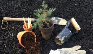 Saving saplings creates future trees.
