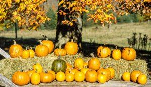 grow pumpkins vertically