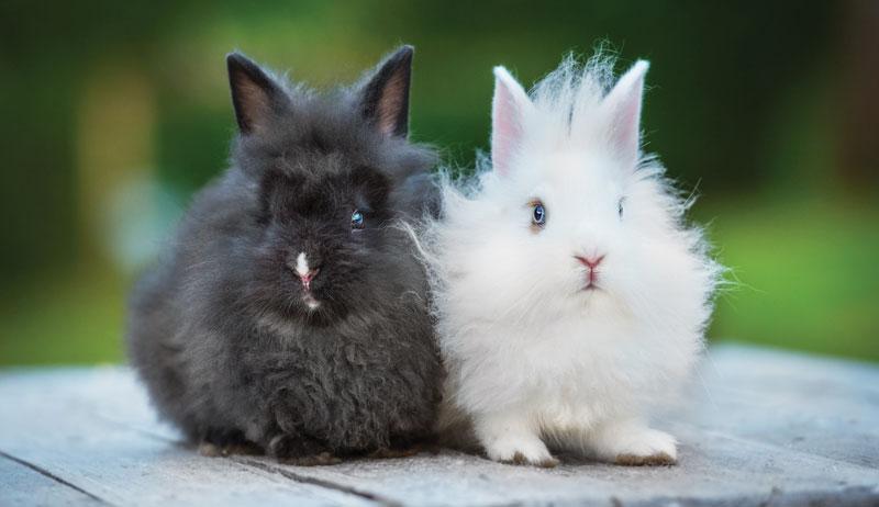 proper rabbit care
