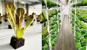 Brick Street Farms hydroponic hydroponics