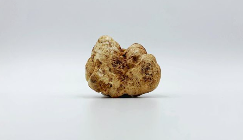 white truffles truffle mushrooms