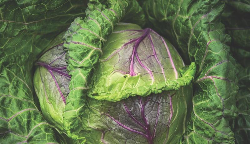 cabbage garden seeds