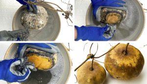 cleaning gourds gourd artwork art craft crafts