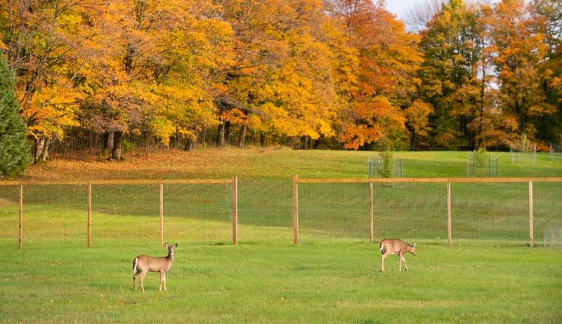 fencing deer orchard