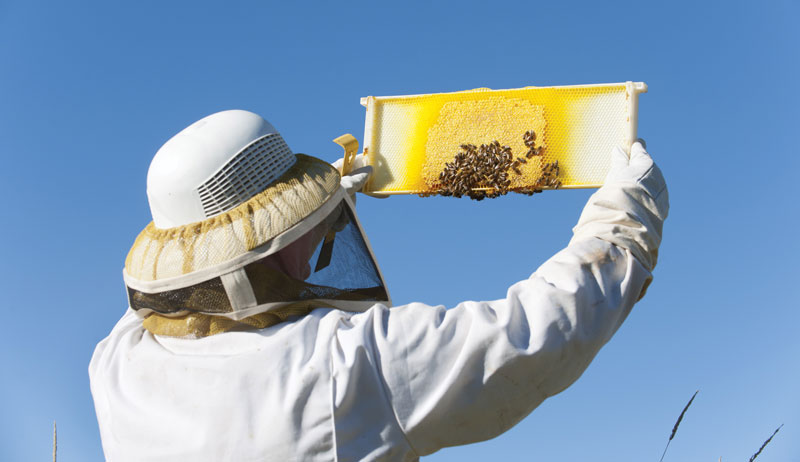 purchase bees
