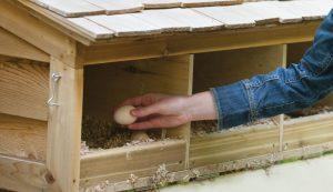 chicken coop design nest boxes