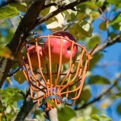 4 Tools You Need For Picking Apples