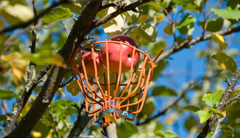 tools for picking apples