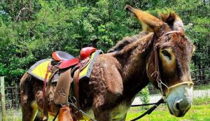 donkey donkeys training listener