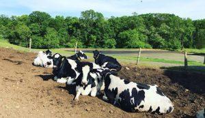 Fulper Family Farmstead