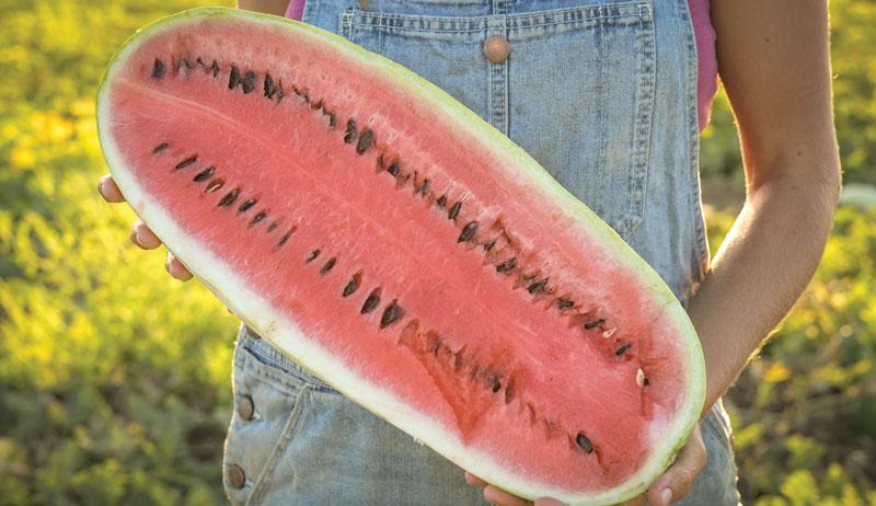 watermelons georgia rattlesnake