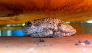 frog toad amphibian habitat