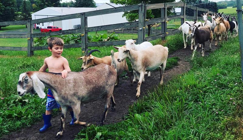 goat's milk gelato Hidden Pastures Goat Dairy