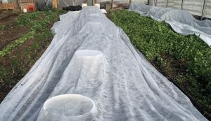 garden freeze frost