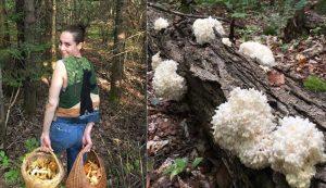 wild mushrooms mushroom