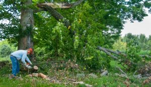 tools and equipment fallen trees storms