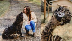 hobby farm emus