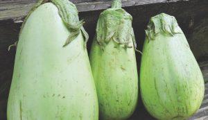green oval eggplant garden seeds