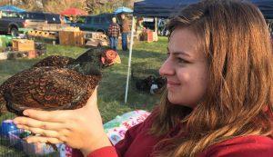 cornish chicken