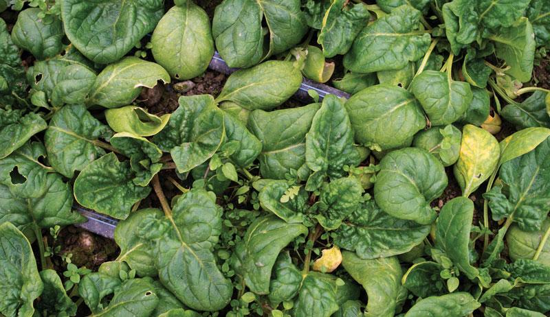 leasing farmland produce