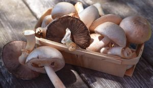 grow your own mushrooms on compost