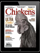 Chickens-November/December 2021 Digital