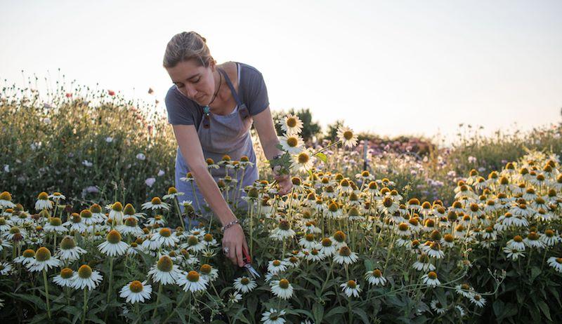 cut flower garden seasonal flowers