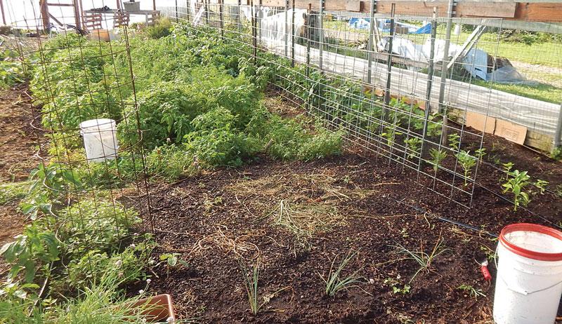 trellis garden plants