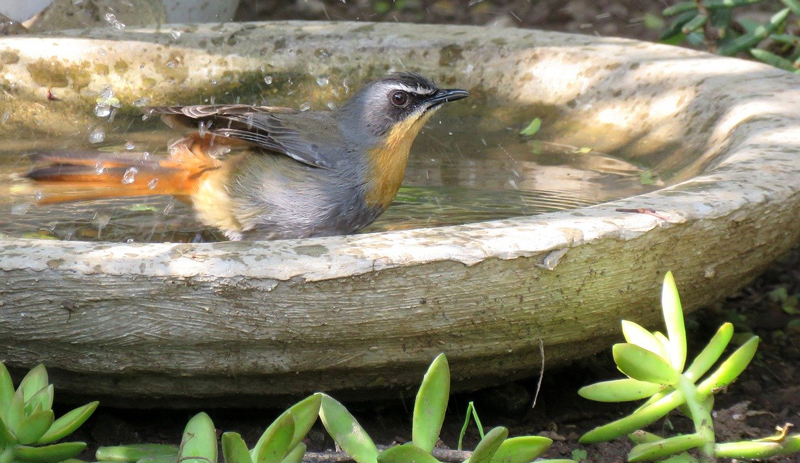 clean bird birdbaths feeders birdbath