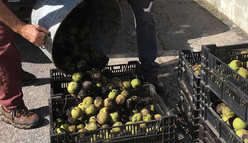 black walnut forage farm business sell